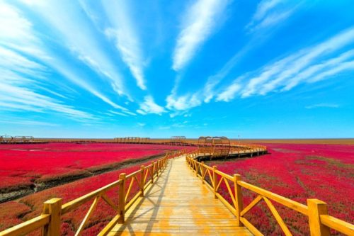Красный пляж в Паньцзине, Китай