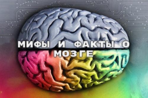 Мифы и факты о мозге