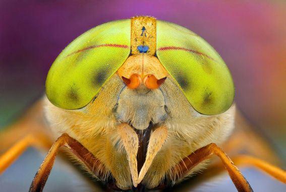 12 фото насекомых с красивыми глазами