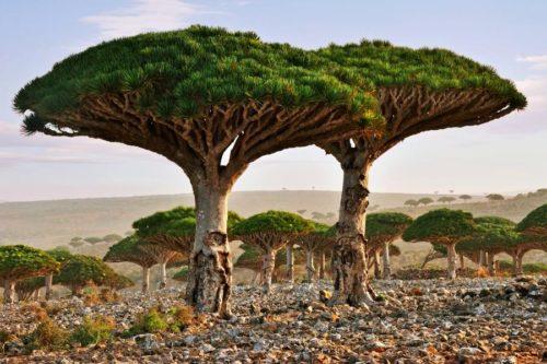 Самые необычные деревья