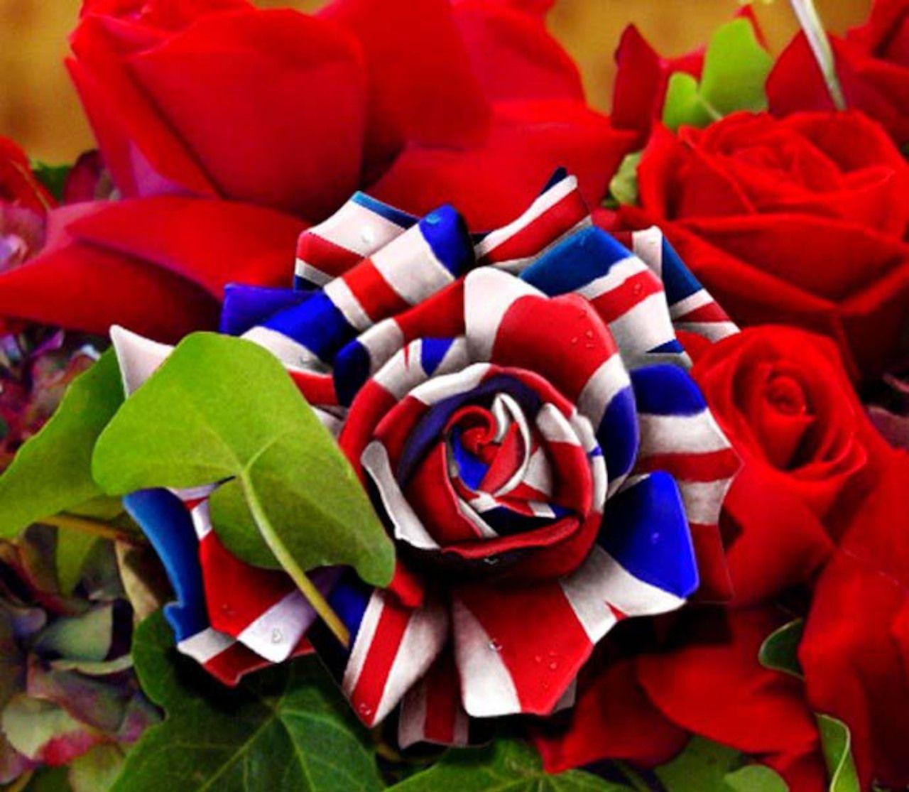 Почему роза — символ Англии