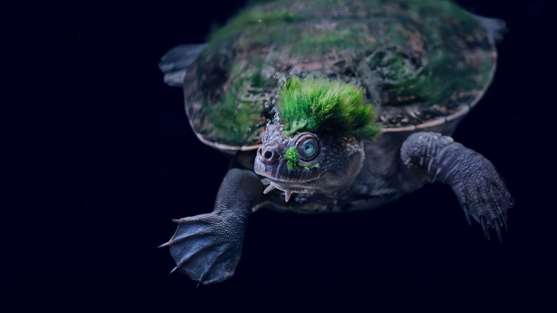 Необычные виды черепах