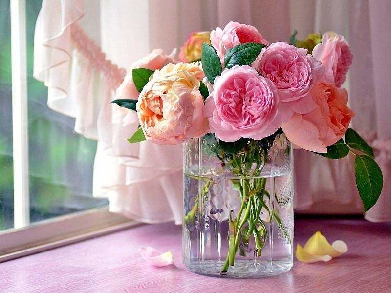 Как сохранить дольше розы в вазе? Правила сохранения роз