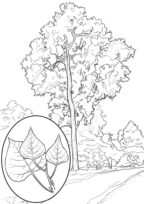 картинки с контурным изображением деревьев начинающих можно использовать