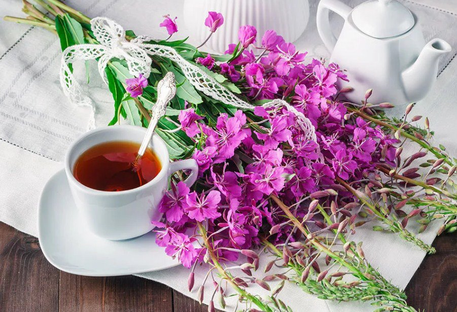 Какими свойствами обладает иван чай