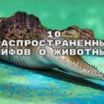 10 распространённых мифов о животных