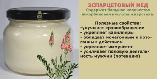 Эспарцетовый мед — полезные свойства и противопоказания