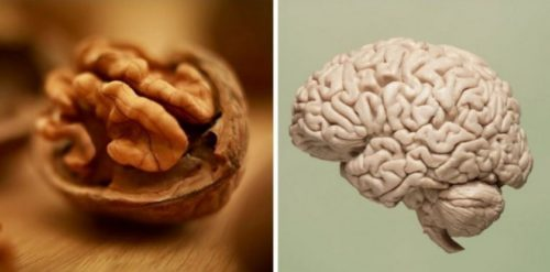 Орехи=мозг