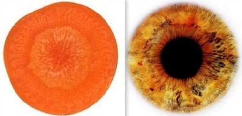 морковь=глаза