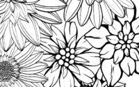 Раскраска антистресс цветы