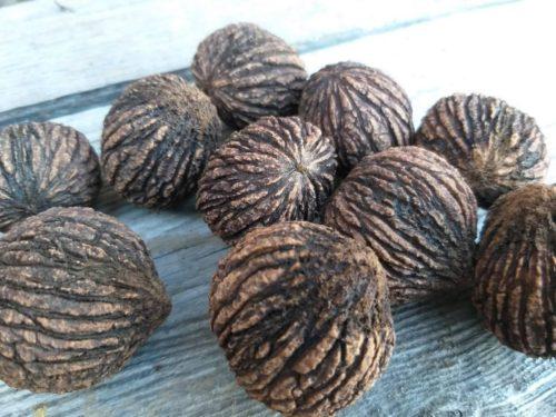 Родиной чёрного ореха принято считать Северную Америку, но с 1630 года он прибыл в Европу. Сегодня орех характерного тёмного цвета можно встретить часто, своё распространение он получил благодаря полезным качествам.