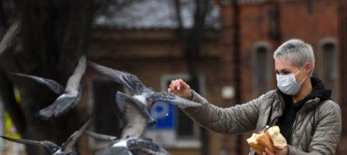 Смогут заразится и передать людям коронавирус голуби?