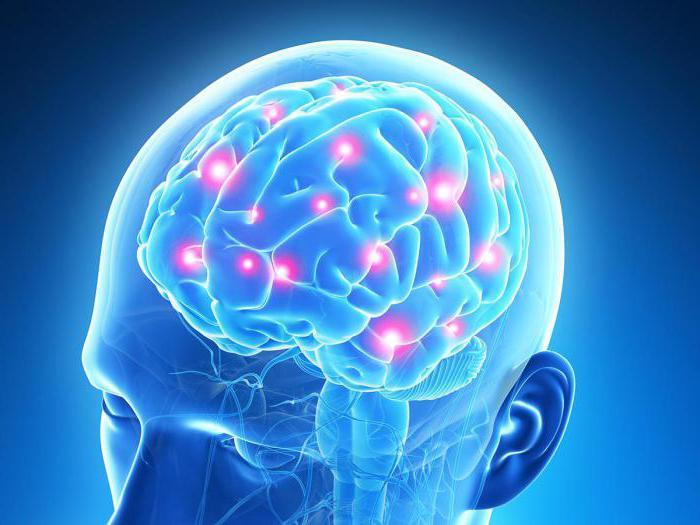 Почему Лецитин так важен для мозга и нервной системы