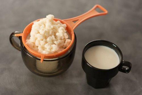Молочный гриб — полезные свойства и противопоказания