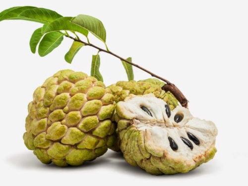 Кремовое яблоко — полезные свойства и противопоказания