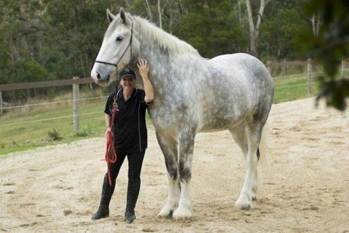Самый большой конь в мире
