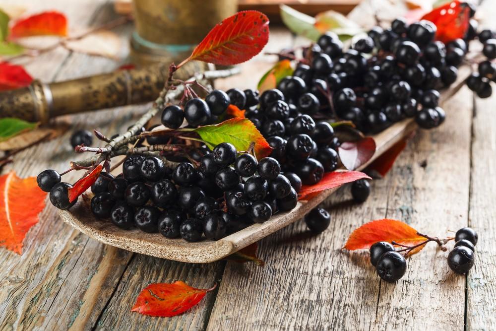 Черная рябина — полезные свойства и противопоказания