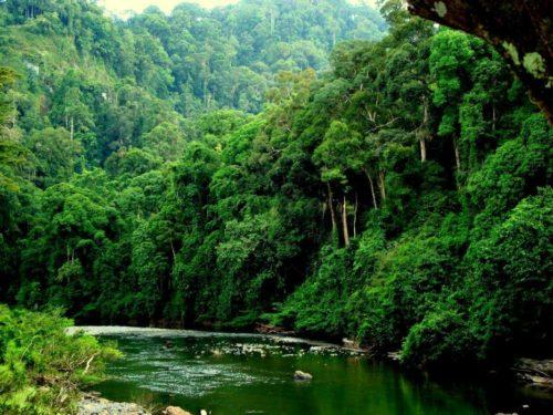 остров Комодо и тропический лес Амазонки